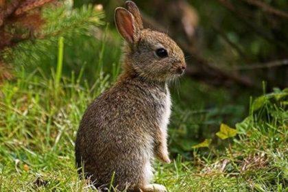 Descaste Conejos Valdemorillo