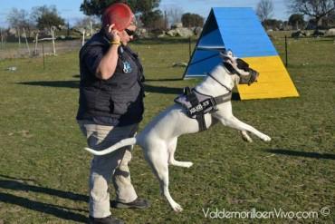 Club Mojadillas adiestramiento canino Valdemorillo