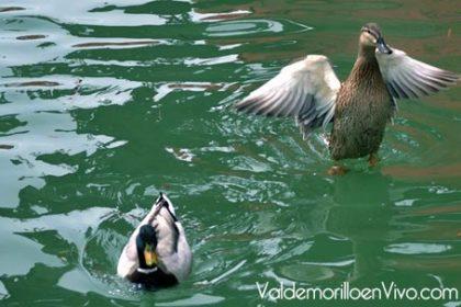 senderismo ornitológico Valdemorillo