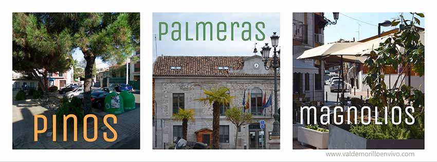 árboles plaza Valdemorillo